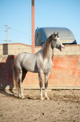 DWP FREE HORSE STOCK 414 by DancesWithPonies