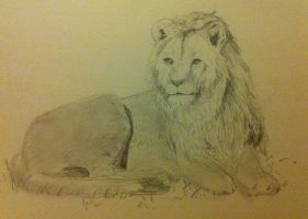 Lion sketch by sarahyt