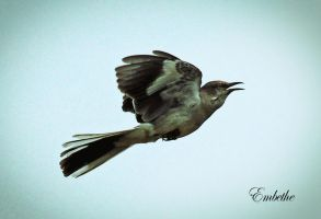 Flying Home by embethe