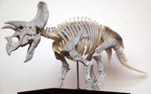 Triceratops LG4 by hannay1982