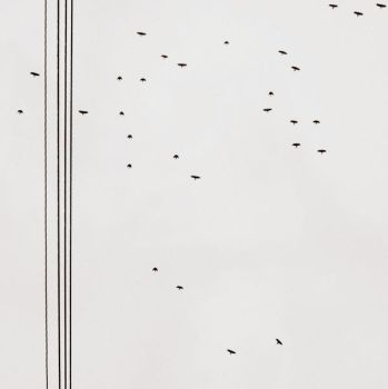 Birds + Lines I by Daionii