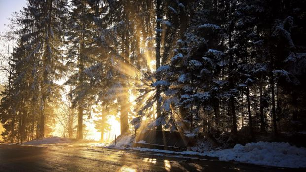 Sunset in a forest in Arni (Switzerland) by Redstone--Army