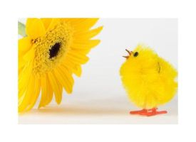 Chick and Gerbera by AgresticLamia
