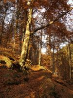 forest path 2 by FrantisekSpurny