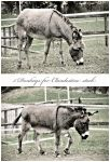5 donkeys by clandestine-stock