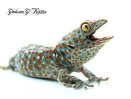 Tokay1 by GuillaumeGagnon