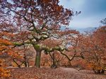 Dancing oak dryad - fall red, landscape by zeitspuren