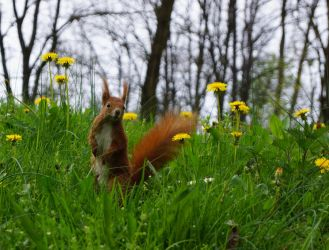 Squirrel by photo-exile