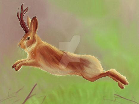 The Bouncing Jackalope by CaptainKharma