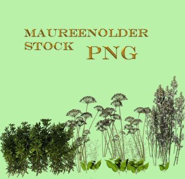 STOCK PNG more plants by MaureenOlder