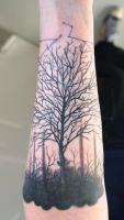 trees trees trees by graynd