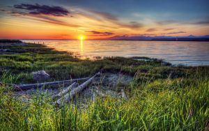 Fraser Spring by IvanAndreevich