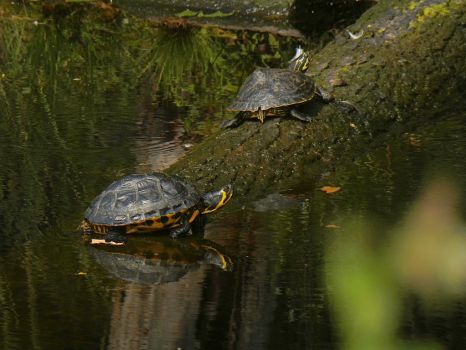 Turtles by mbrv4ever