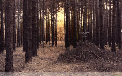 Golden Forest Wallpaper by Clu-art