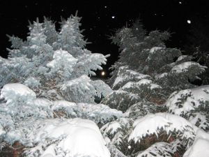 Snow fir tree forest night winter 2 by Redilion