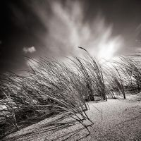 Follow the wind by etchepare