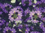 the flowerdays XIII by Bodhisattvacary