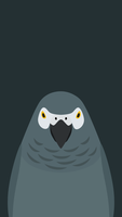 Grey Parrot v2 - bird wallpaper for iPhone by birnimal