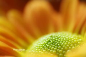 the sun by illusionality