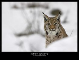 Into the White by ClaudeG