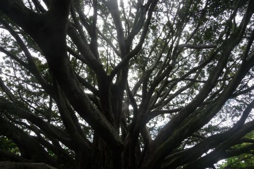 Banyan Tree 7 by Niedec-STOCK