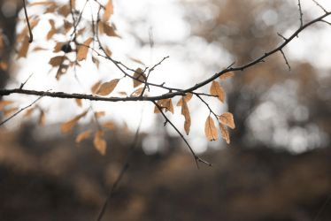 autumn has come by onwards-and-upwards
