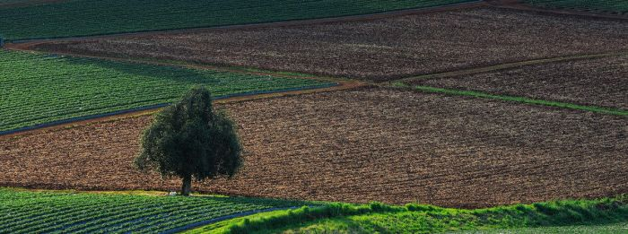 strawberry fields forever by arthurking83