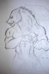 werewolf drawing 5 by tribalwolfie