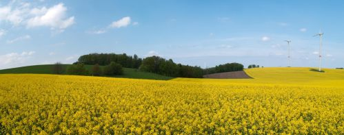 Land of Rapeseed by Muehsam