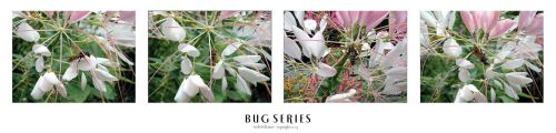Bug Series by siostra-rana