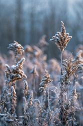 Early morning Frost by ryangallagherart