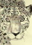 leopard by 2points4honesty