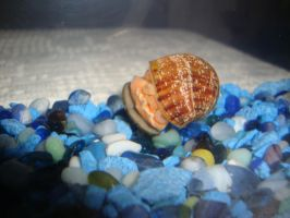 My Snail White Berry by CutePetLover
