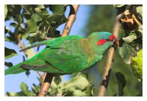 Parrot CRW_5301-01 by Dyer-Consequences