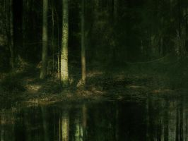 forest 44 re-ed. by Amalus