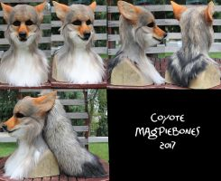 Coyote Head and Tail -NEW FEATURES! by Magpieb0nes
