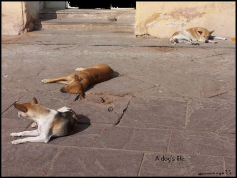 A dog's life. by kouqa