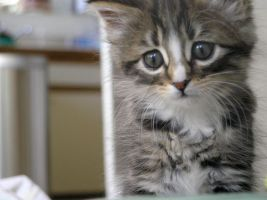 Kitten by Readsway2much