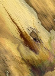 Painted on a Plank by DigitalPainters