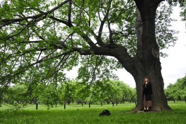 with the oak by BLACKBLACKSQUARE