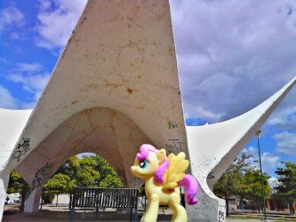 Fluttershy en Hermosillo by Catsofdeath