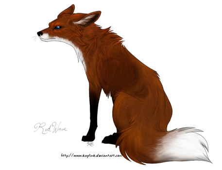 Fox by KairiNaami