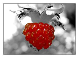 red berry by chinlop