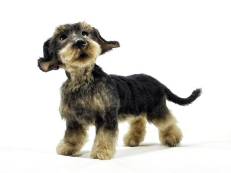 OOAK realistic wire haired dachshund by KALEideaSCOPE