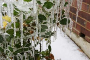 icicle off leaves by Palonaristin