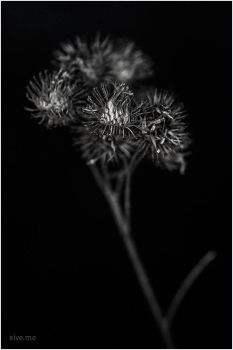 b/w nature.3 by Ilmael