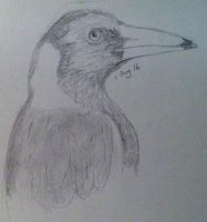 Magpie sketch by sarahyt