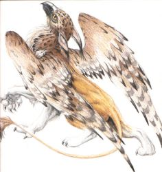 colored pencil griff by hibbary
