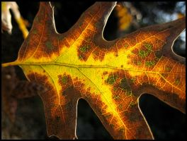Stained Glass Autumn Leaf by aelthwyn