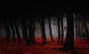 -Permeation the life and death- by Janek-Sedlar